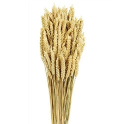 Wheat - Natural (80cm tall, 200g)