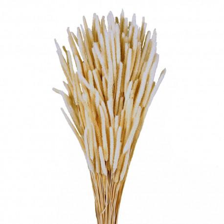 Phleum - White (60cm tall, 100g)