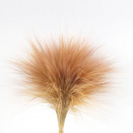 Preserved Barba - Natural (100g)