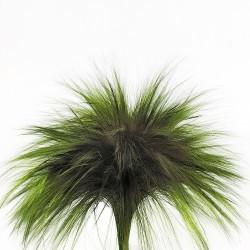 Preserved Barba - Green (100g)