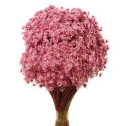 Marcela - Light Pink (30cm tall, 50g)