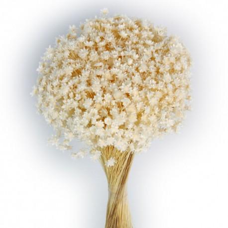 Glixia - White (50cm tall, 50g)