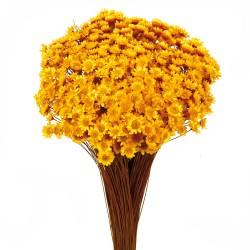 Glixia - Yellow (50cm tall, 50g)