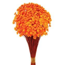 Glixia - Orange (50cm tall, 50g)