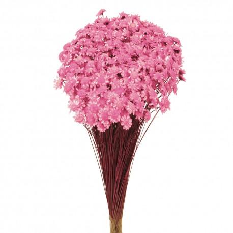 Glixia - Light Pink (50cm tall, 50g)