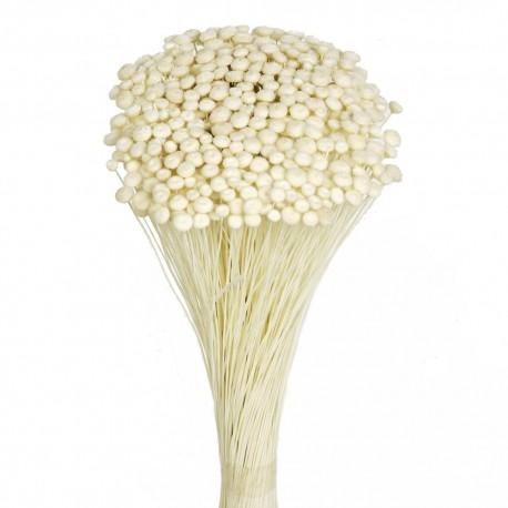 Amarelino - White (45cm tall, 120g)