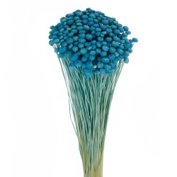 Amarelino - Light Blue (45cm tall, 120g)