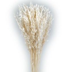 Avena Sativa - White (80cm tall, 200g)