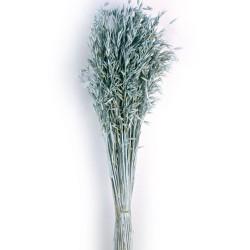 Avena Sativa - Dusty Blue (80cm tall, 200g)