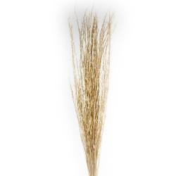Mustard Grass - Natural (1m tall, 100g)
