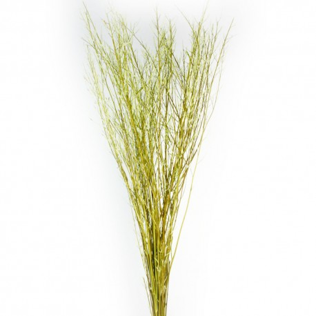 Mustard Grass - Green (1m tall, 100g)