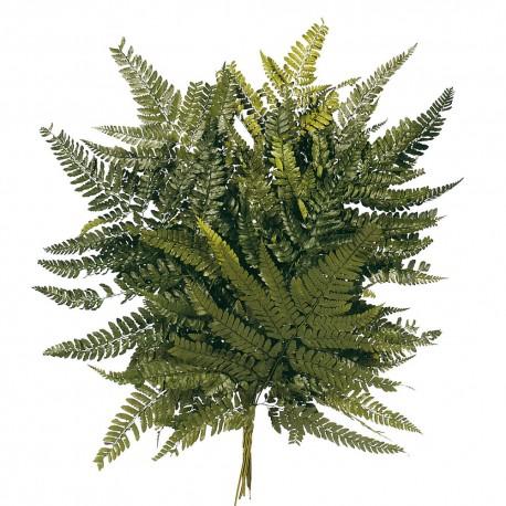 Preserved Leather Fern - Green (40cm tall, 10pcs per pk)