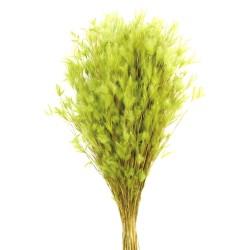 Pluminha - Lime Green (70cm tall, 100g)