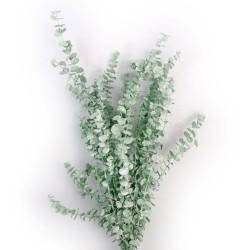 Preserved Baby Eucalyptus  - Green/Grey (150g per pk)