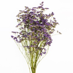Limonium - Natural (60cm tall)