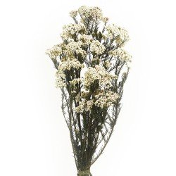 Preserved Rice Flower - Natural (60cm tall, 100g)