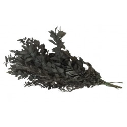 Preserved Ruscus - Grey (150g)