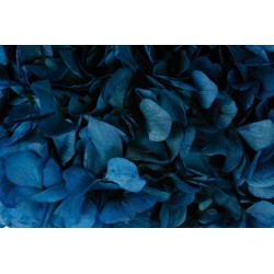 Preserved Hydrangeas - Navy (approx. 4 stems per pk)