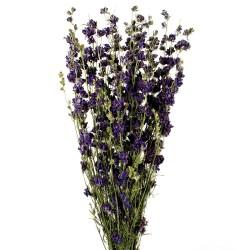 Delphiniums - Blue (70cm tall)
