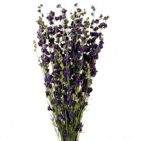 Delphiniums - Purple (70cm tall)