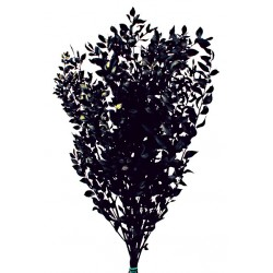 Preserved Ruscus - Black (150g)