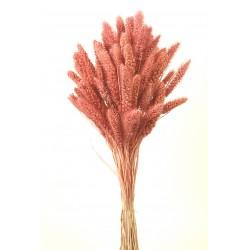 Setária - Pink (75cm long)