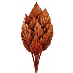 Palm Spear - Brown (10pcs per pk)