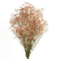 Preserved Gypsophila - Pink/Natural (100g per pack, 60cm long)