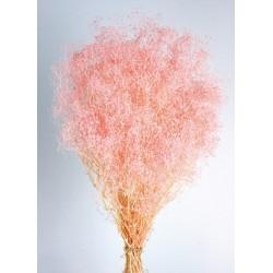 Preserved Gypsophila Mini - Pink (40/50cm tall, 100g per pk)