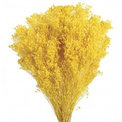 Preserved Broom Blooms - Yellow (50cm tall, 100g)