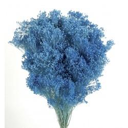 Preserved Broom Blooms - Blue (100g)