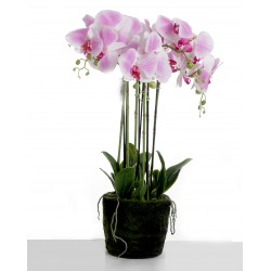 Real Touch Artificial Orchids In Moss Pot - Purple/White (60cm tall, 6 stems)