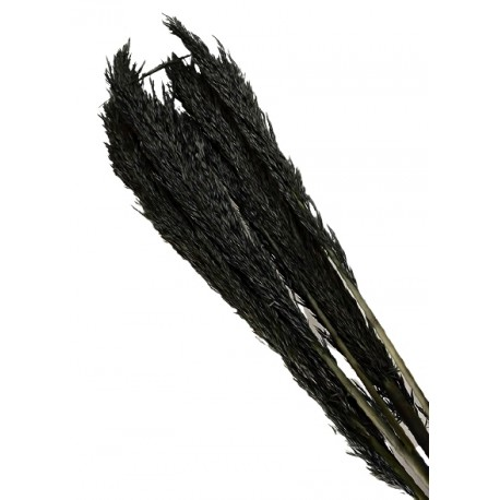 Cana Silvestre - Black (approx. 90cm long, approx. 6pcs per pk)