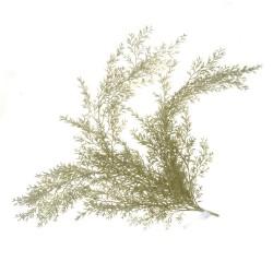 Feathered Fern Bush - Green/White (78cm long)