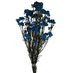 Preserved Rice Flower -  (60cm tall, 100g)