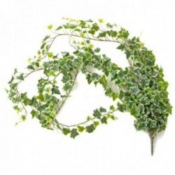 Large Ivy Bush - Variegated (182cm Long)