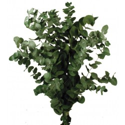 Preserved Spiral Eucalyptus - Green (150g per pack, 50-80cm tall)